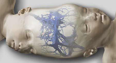 包括他们的骨骼结构及头盖骨(图中用蓝色标注)