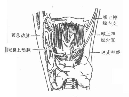 颈部血管详细解剖图谱