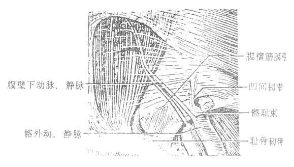 肌管系统手绘图
