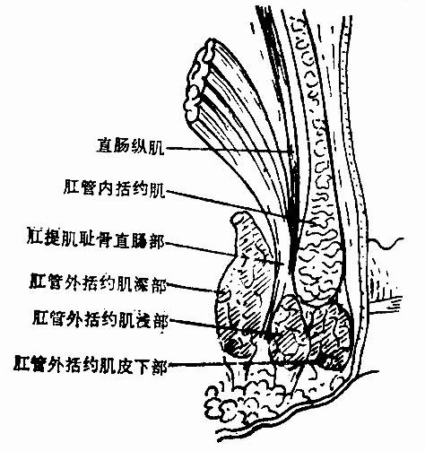 血管血栓手绘图